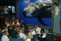 Museo de cetáceos de canarias, yaiza (lanzarote)