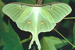 Butterflies center, llagostera (girona)