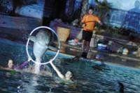 'Noches del zoo'. zoo aquarium de Madrid