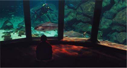 Aquarium finisterrae, la coruña