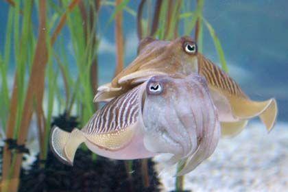 La pasión de la primavera, l'aquarium de Barcelona