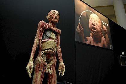 'Érase una vez... el cuerpo humano', museo de la ciencia de valladolid.