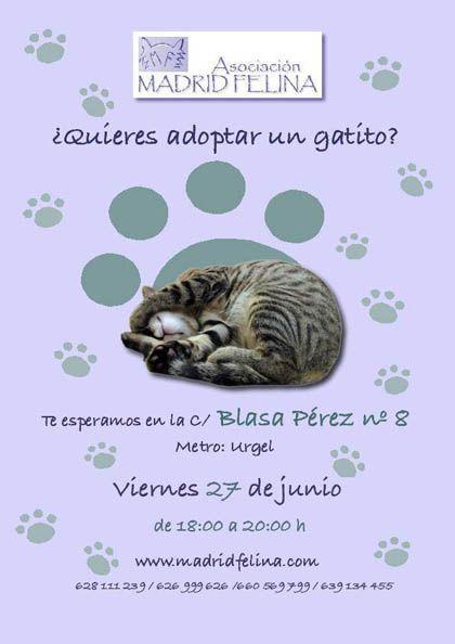 'Día de la adopción' Madrid felina, Madrid