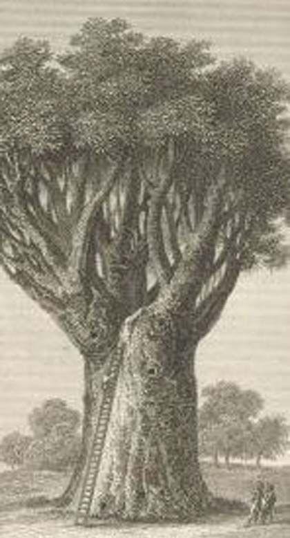 Nocturnos de verano: 'Canarias en la mitología' museo de historia y antropología de Tenerife