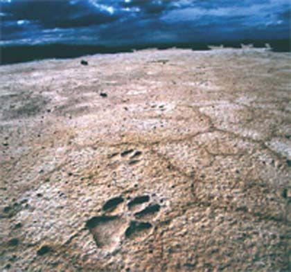 'Las raíces de la tierra', museo de las ciencias de castilla-la mancha (cuenca)