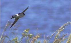 'Mira al pajarito': taller de iniciación a la observación de aves, c.e.a polvoranca, leganés
