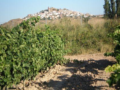 'Vinotalleres', la rioja