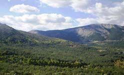 Visita temática: 'Descifrando el paisaje', c.e.a. arboreto luis ceballos, montejo de la sierra (Madrid)