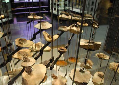 «¡viva la diferencia! el tesoro más valioso de los últimos mil millones de años», Cosmocaixa, Madrid