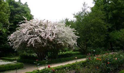 Visitas de fin de semana, real jardín botánico, Madrid