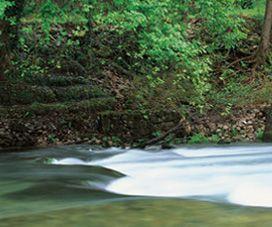 Mondariz, baño de naturaleza
