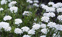 Visita guiada: 'Plantas al límite: adaptaciones a ambientes extremos', real jardín botánico, Madrid