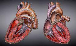 Taller: 'Cuidemos la salud del corazón',centrocaixa murcia