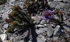 Taller: 'Ecología marina', centrocaixa murcia