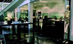 Visita nocturna dramatizada: 'La noche de los esqueletos', museu egipci de Barcelona