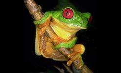 Ecosafari: 'El coro de los anfibios', parque de montjuïc, Barcelona