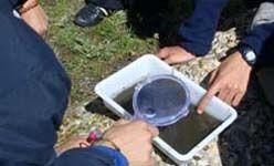 Ecosafari: 'Inspeccionando los pequeños habitantes del río manzanares en el pardo' (Madrid)