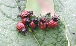 'Fin de semana de los insectos', C.E.A. Valle de la Fuenfría, Cercedilla (Madrid)
