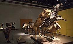 'Animales de museo. el arte de la taxidermia', parque de las ciencias, Granada