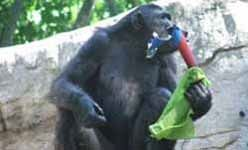Ecosafari: 'Homo urbanus, el coleccionista de mascotas', (Barcelona)