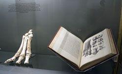 'Darwin observador, darwin naturalista'. Cosmocaixa Barcelona