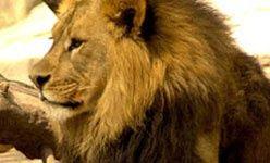 Parque zoológico de león (guanajuato)