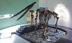 Museo de paleontología de guadalajara, (jalisco)