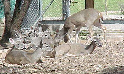 Zoológico los coyotes, Ciudad de México