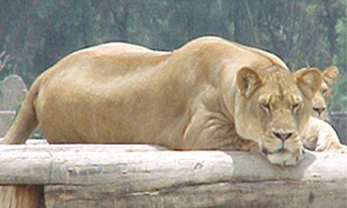 Zoológico de san juan aragón, Ciudad de México