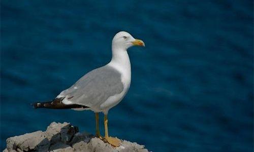 Ecosafari en la playa: 'Conocer las aves marinas', playa de la barceloneta, Barcelona