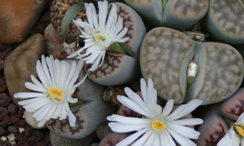 Visita guiada: 'Adaptación a ambientes extremos', real jardín botánico, Madrid