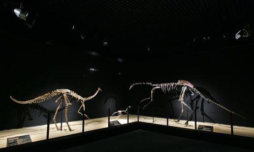 'Dinosaurios. tesoros del desierto de gobi', Cosmocaixa Madrid