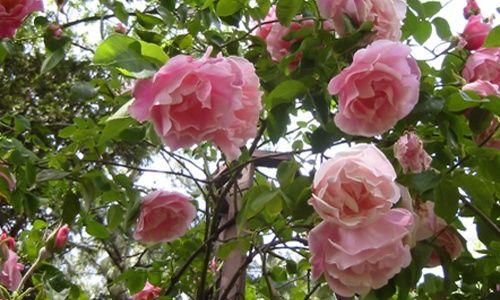 Visita guiada: 'La rosaleda', real jardín botánico, Madrid