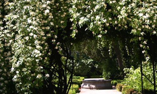 Visita guiada: 'Los bosques ibéricos', real jardín botánico, Madrid