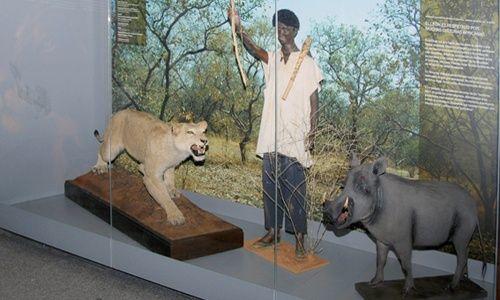 'Vivir en biodiversidad total con leones, tigres o lobos', museo nacional de ciencias naturales, Madrid