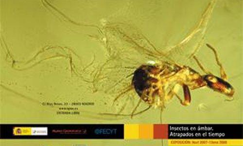 'Insectos en ámbar : atrapados en el tiempo', museo elder de la ciencia y la tecnología, las palmas de gran canaria