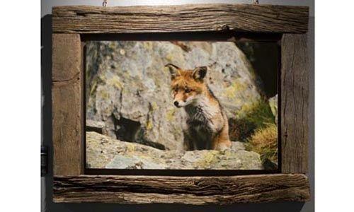 'La mirada salvaje. encuentros con la fauna ibérica', museo nacional de ciencias naturales, Madrid