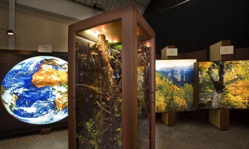 'El bosque. mucho más que madera', Caixaforum Palma de Mallorca