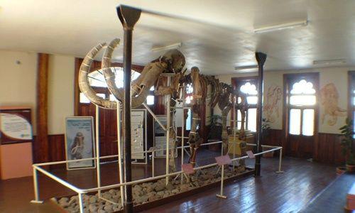 Museo del mamut, chihuahua