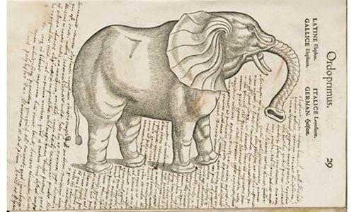 'De la historia natural a la biodiversidad: un pasaje de libro', museo de la biblioteca nacional, Madrid