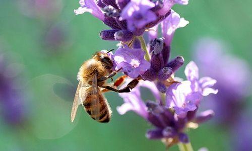 'Día de la abeja', naturalcalá (alcalá de henares)