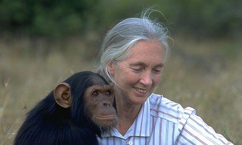 Ciclo de cine: 'Jane goodall, 40 años de investigación con los chimpancés'. Museo de la biblioteca nacional, Madrid