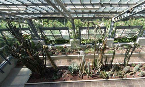 Visita guiada: 'Los invernaderos del jardín', real jardín botánico, Madrid
