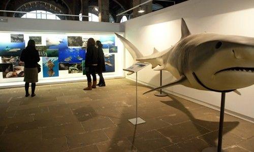 'A favor de los tiburones, un mar de esperanza'. Museo Marítimo de Barcelona