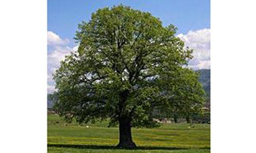 'Nuestros árboles'. centro nacional de educación ambiental, valsaín (Segovia)