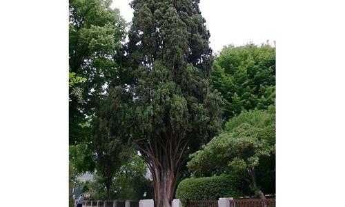Visita guiada: 'árboles singulares', real jardín botánico, Madrid