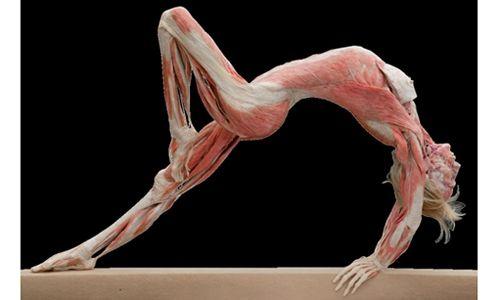 'Body Worlds & Un viaje por el corazón'. Universum, Museo de las Ciencias de la UNAM, Ciudad de México