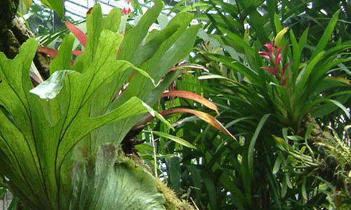 Visita guiada: 'De la selva a la taiga'. real jardín botánico, Madrid