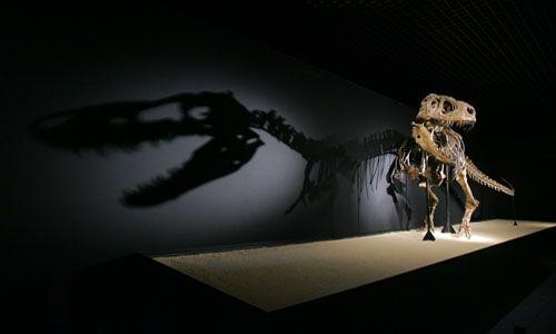 'Dinosaurios. tesoros del desierto de gobi'. Cosmocaixa Barcelona