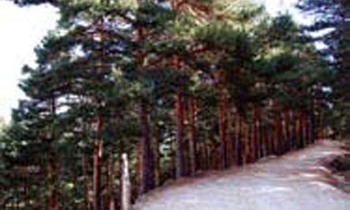 'Descubre los árboles singulares', la casa encendida, Madrid